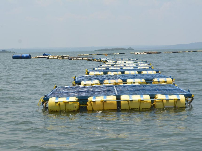 Fishing cages in Lake Victoria.  Photo Courtesy of The Star
