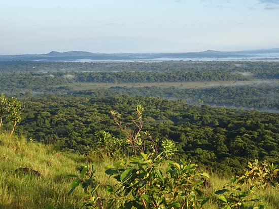 Aerial view of Kakamega Forest Reserve.  Photo Courtesy of Trip Advisor