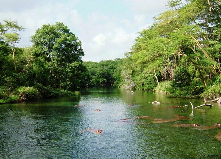 Mzima Springs in Tsavo West National Park.  Image Courtesy of KWS
