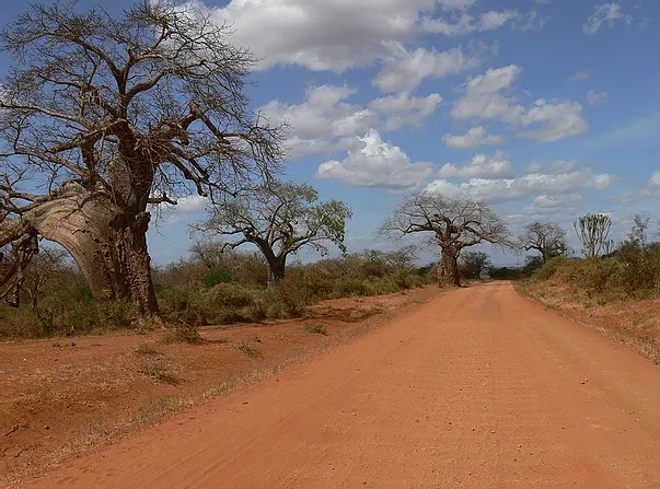 View of Baobab tree along a stretch of road in Machakos.  Photo Courtesy