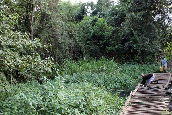 View of the Kipsegon Ecosystem.  Photo Courtesy of Nation Media