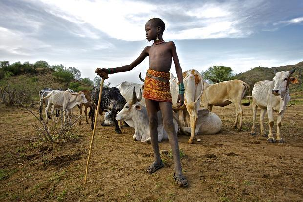 Boy herding livestock in Turkana.  Photo Courtesy of HuffPost