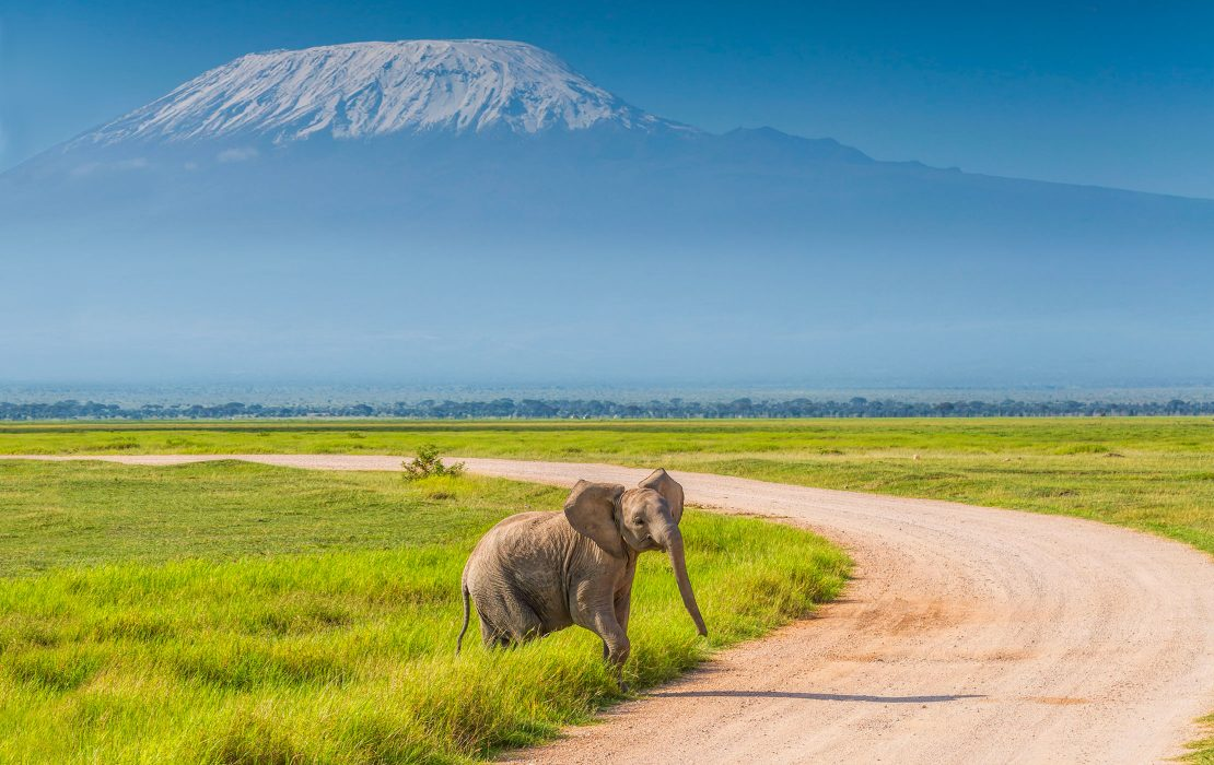 The spectacular Amboseli National Park.  Photo Courtesy of Micato Safaris
