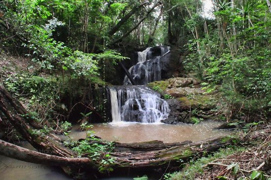 View of the Karura Falls within the Karura Forest.  Photo Courtesy of Trip Advisor