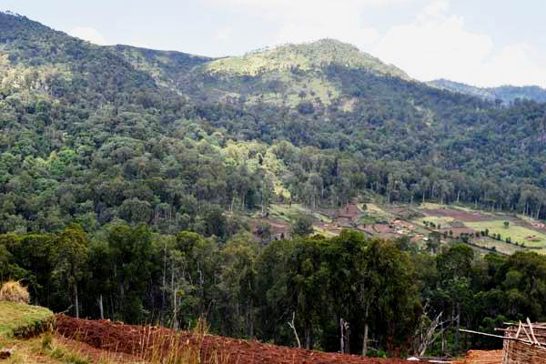 View of a section of the Kibiri Forest.  Photo Courtesy of Nation Media Group