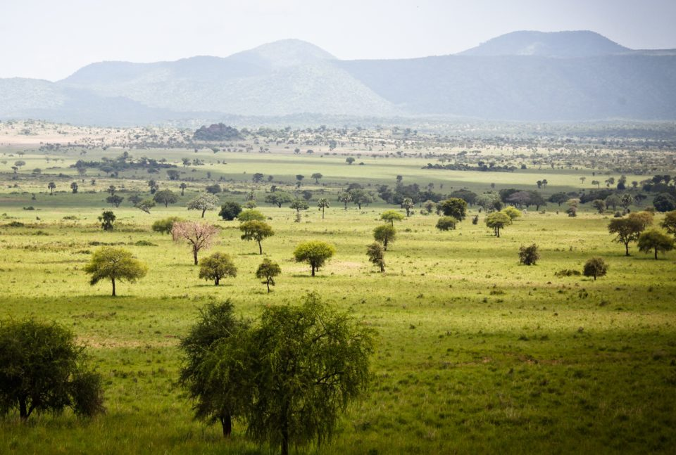 Kidepo Valley National Park.  Photo Courtesy of Journeys by Design