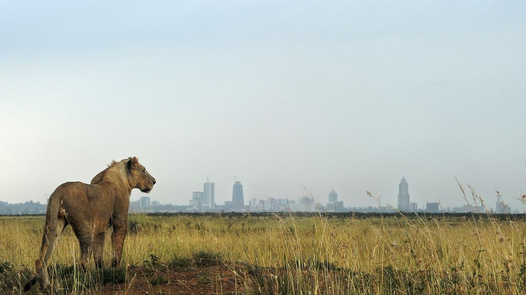 View of the Nairobi City skyline from Nairobi National Park.  Photo Courtesy of The National