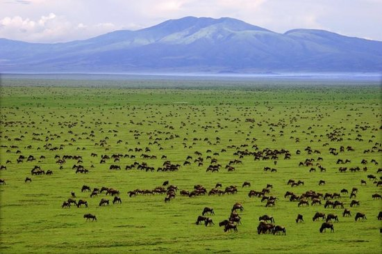 View of the stellar Serengeti National Park.  Photo Courtesy of Trip Advisor