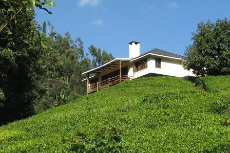 View of the Kimakia Tea Cottage at Kiarutara Village.  Photo Courtesy of Langata Links