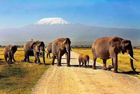 Visit Kenya: View of the Amboseli National Park - 10 Best Game Parks in Kenya