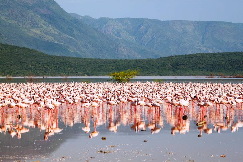 Lake Bogoria National Reserve - A Guide to Game Parks in Kenya