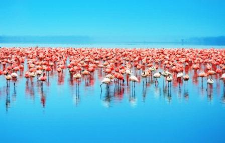 View of flamingos in Lake Nakuru National Park in Nakuru County.  Photo Courtesy