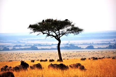Visit Kenya: View of the Masai Mara National Reserve - 10 Best Game Parks in Kenya