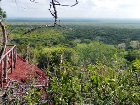 View at the Arabuko Sokoke Forest Reserve.  Photo Courtesy