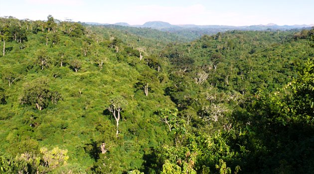 Embobut Forest