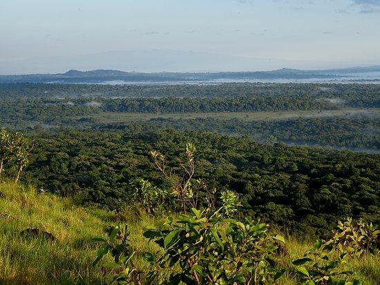 Kakamega National Reserve