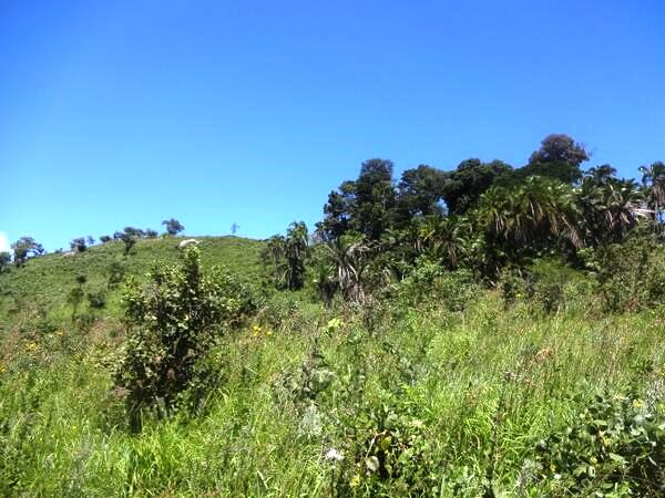 Kiang'ombe Forest Reserve