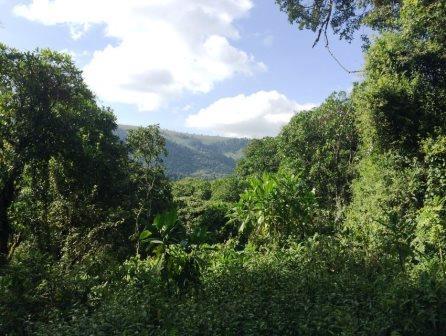 Koibatek Forest