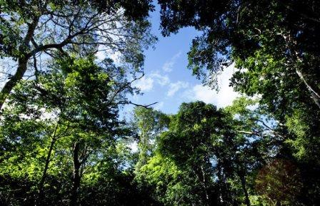 Lembus Forest