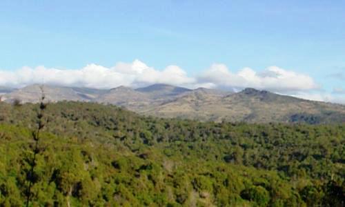 Chepkitale Forest