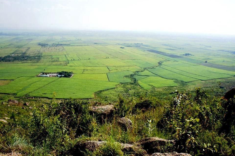 Section of Nyando Sugar Belt as seen from Nyando Escarpment.  Photo Courtesy