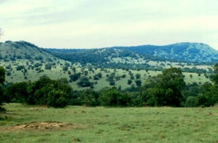 Trans Mara Forest