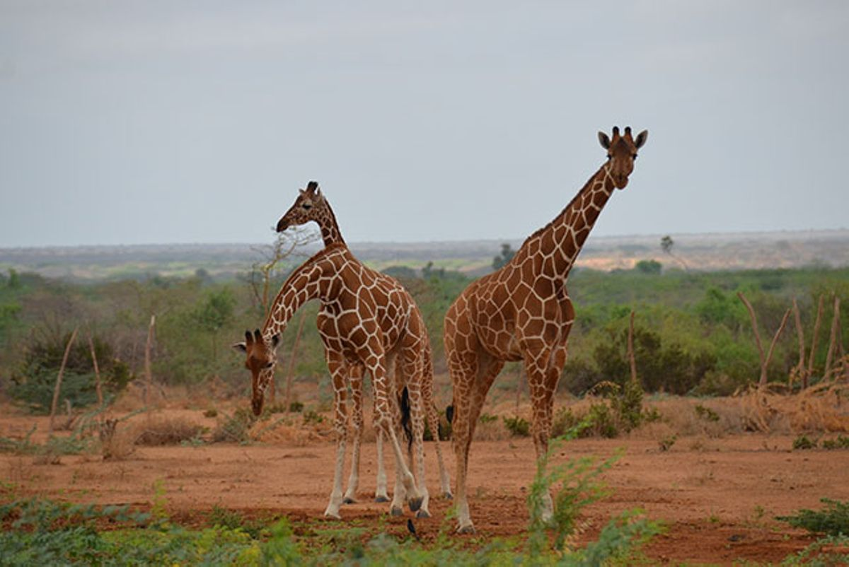 View of wildlife in Garissa.  Photo Courtesy