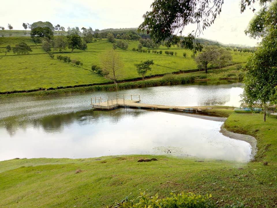 Chemusot Estate in Kericho County.  Image Courtesy of Bett CFC