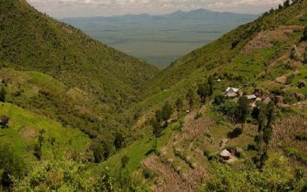 Gwasi Hills Forest