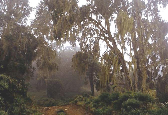 Murinduko Hill Forest