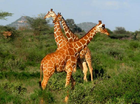 Bour-Algi Giraffe Sanctuary