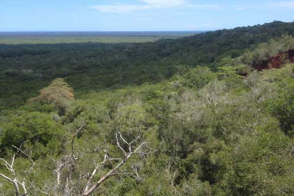 Arabuko Sokoke Forest Reserve in Kilifi County.  Image Courtesy of Nation Media.  Forests in Kenya