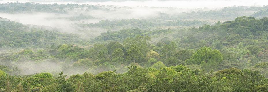 Boni-Lungi Forest in Lamu County. Image Courtesy of Kenyapoa