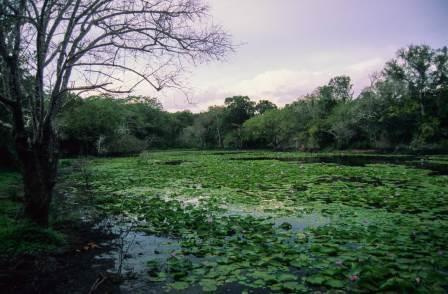 Dodori National Reserve in Lamu County
