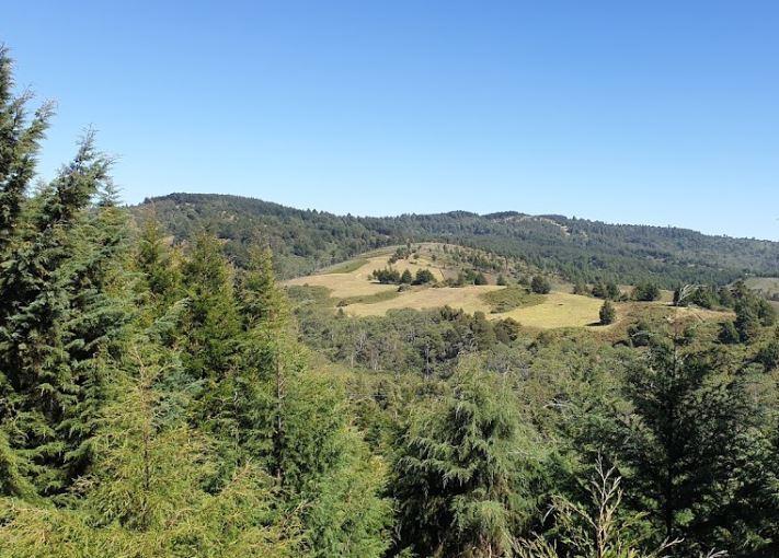 Kereita Forest in Kiambu County.  Photo Courtesy of Mansoor jiwani
