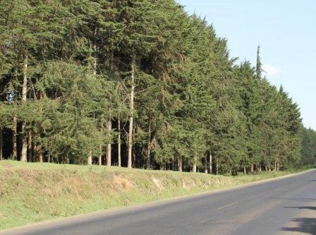 Kinale Forest in Kiambu County
