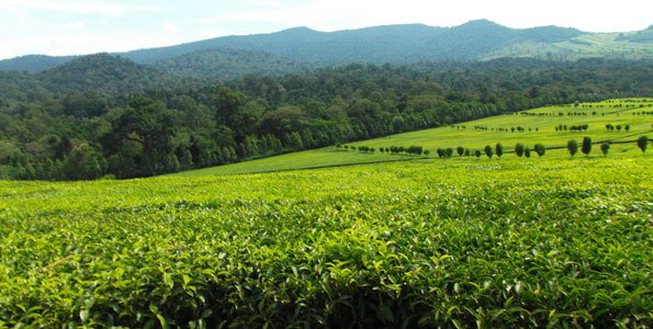 Tinderet Mountain in Kericho County.  Image Courtesy of The Star