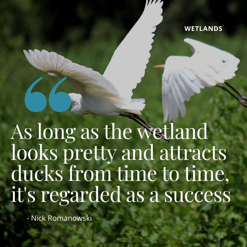 "Travel Quote - ""As long as the wetland looks pretty and attracts ducks from time to time, it's regarded as a success"" - Nick Romanowski - A Guide to Wetlands in Kenya"