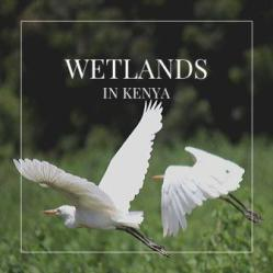 Kenya's estuarine wetlands inventory includes those in the Tana River Delta, at Mombasa, Shimo La Tewa, Kilifi, Turtle Bay as well as the islands of Lamu, Pate and Manda.
