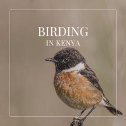Birding in Kenya is one of the finer outdoor activities and there about 1,100 bird species across Kenya. Discover the best birding locations in Kenya.