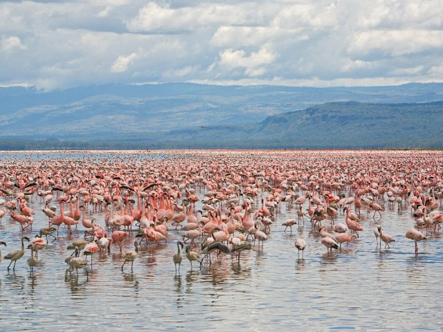 Lake Nakuru National Park. Image courtesy of Hansel Travel