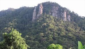 Mpogoro Forest in Meru County