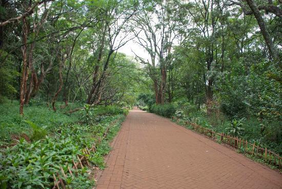 Nairobi Arboretum in Nairobi County.