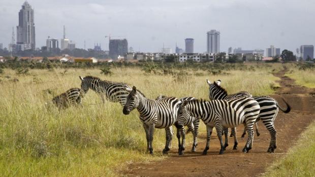Nairobi National Park. Image courtesy of Traveller