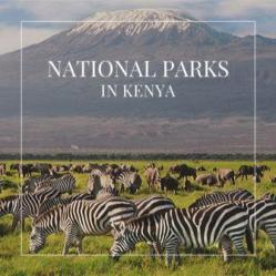 A Guide to National Parks and Reserves in Kenya gives comprehensive information about the 48 National Parks and Reserves. 11% of Kenya is comprised of protected area that harbour a spectacular display of wildlife and marine life.