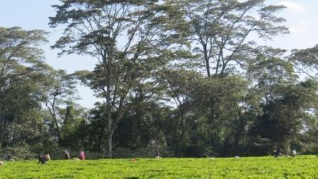 South Nandi Forest. Image Courtesy of Rupi Mangat