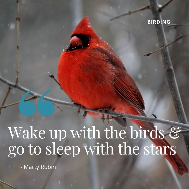 "Travel Quote - ""Wake up with the birds and go to sleep with the stars"" - Marty Rubin. A birdwatchers guide to birding in Kenya"