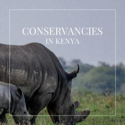 A Guide to Wildlife Conservancies in Kenya gives comprehensive information about the major conservancies in Kenya. In all, Kenya has about 110 wildlife conservancies, all promoting the placid co-existence of people and wildlife in mutual well-being.