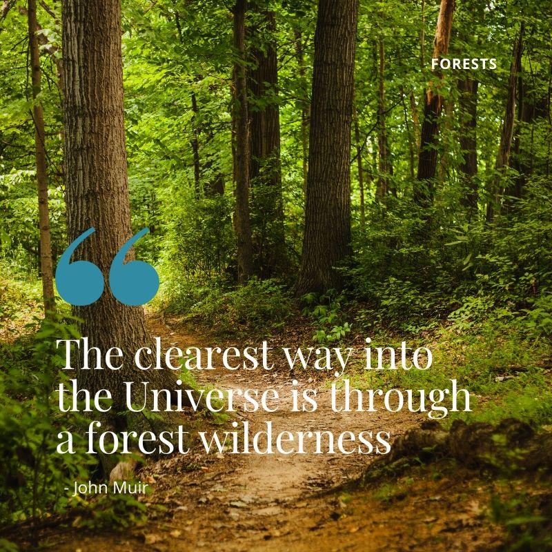 Forests in Kenya