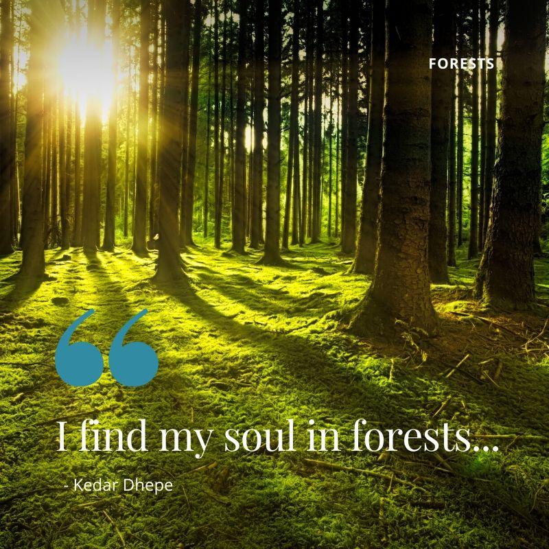 Forests of Kenya
